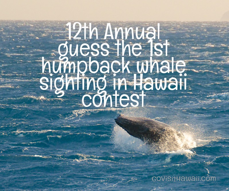 12th annual contest to predict Hawaii's first humpback whale sighting of the new season